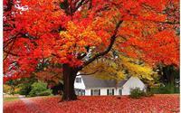 Những ngôi nhà dưới tán lá vàng lãng mạn như một bức tranh phong cảnh tuyệt đẹp