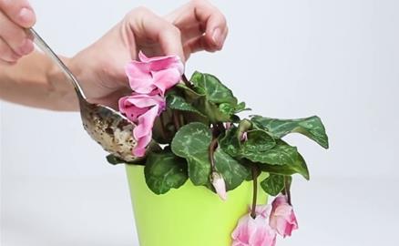 Mẹo cực hay giúp hoa, cây cảnh sắp chết héo cỡ nào cũng tươi tốt chỉ sau vài ngày