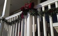 Sử dụng cây xanh trong nhà để trang trí Noel, cách làm mới mẻ nhưng hiệu quả bất ngờ