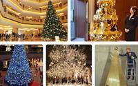 Chiêm ngưỡng những cây thông Noel đắt đỏ bậc nhất thế giới