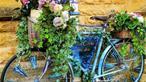 16 ý tưởng tái chế đồ cũ thành chậu hoa xinh xắn