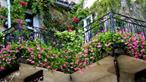 Trồng vườn hoa trong nhà chật không khó