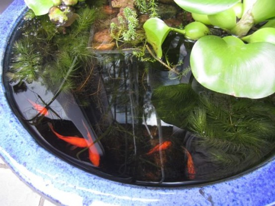 Trang tr s n v n si u p b ng ch u ti u c nh mini for Pond in a pot with fish