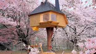 """15 thiết kế nhà trên cây tuyệt đẹp khiến bạn """"ngắm không chớp mắt"""""""