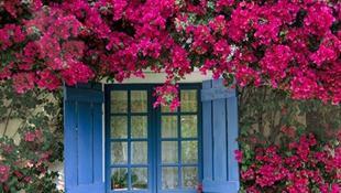 Nhà đẹp nhờ giàn hoa giấy