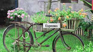 Những ý tưởng trang trí sân vườn với xe đạp vô cùng lãng mạn và thơ mộng
