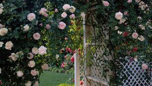 Những cách cực hay để làm mới sân vườn nhà bạn