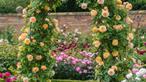 Những khu vườn lãng mạn và ngọt ngào nhờ cổng vòm rực rỡ sắc hoa