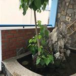 Cần cho thuê phòng Thập Thị Thanh P Tân Định Q1. LH A Lộc