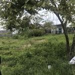 bán lỗ 600m2 đất thổ cư, SHR, ngay khu đô thị Bình Dương, chỉ 550 triệu