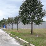 Thanh lý ngay 2 lô đất tại Bến Cát, thuộc phường Mỹ Phước diện tích như ý 300m2 + SHR + có thổ cư