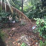 Bán đất vườn cây ăn trái ở Thủ Dầu Một Bình Dương dt: 1890m2 có 300m2