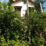 Bán nhà lầu 3 tầng, phong cách vườn