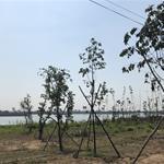 Đất nền cù lao ở Đồng Nai - Vị trí cực kỳ đẹp