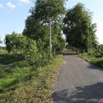 Cần chuyển nhượng đất làm vườn, ở xã Tân Thạnh Tây, huyện Củ Chi, DT 16.000m2, giá 1.2tr/m2