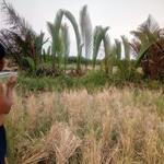 Chính chủ cần bán 2083m2 đất lúa Phú Đông Nhơn Trạch, 850 triệu/1000m2, bao sang tên thuế phí