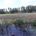 Bán đất kv1 tt Đức Hòa , gần dự án Areca, đường đá xanh 7m . Diện tích 2000mv , giá 3 tỷ.