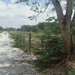 CẦN TIỀN GẤP BÁN 2 LÔ ĐẤT TRỒNG CÂY LÂU NĂM NGAY NGÃ 3 PHẠM VĂN CỘI