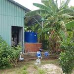 Chính chủ bán nhà vườn 1000m2 tại Phú Hữu Nhơn Trạch Đồng Nai giá 2.1 tỷ: Mr Mãnh