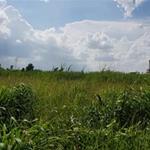 Cần bán lô đất diện tích lớn 568m2 ở Bình Chánh - 2tr9/m2 - sổ riêng. LH: 099.887.249