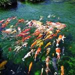Biệt Thự Ven Sông Đẳng Cấp Quý Tộc Bật Nhất Sài Gòn