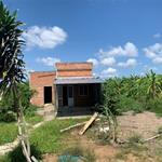 17 công đất tiền giang có thổ cư, sổ hồng, nở hậu, mặt tiền, xe tải vô được, điện nước đầy đủ