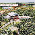 Cần bán 2 vườn xoài,  2 vườn quýt, bưởi có sổ hồng riêng từng vườn giá chỉ 500tr/1000m2
