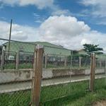 Chính chủ bán đất giá rẻ mặt tiền Đường Kênh Đông - Tân Thông Hội - Củ Chi
