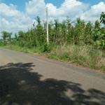 Cần bán gấp khuôn viên đất  mặt tiền đường, Huyện Bù Đốp, Tỉnh Bình Phước