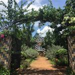 Bán gấp lô đất vườn giá rẻ, DT 1000m2 (quy hoạch full 100% thổ cư) ở Đồng Nai, LH 0932056011
