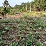 Chính chủ cần thanh lý lô đất đẹp 4262m2 giá cực tốt tại Xã Tân Tiến - Bù Đốp - Bình Phước