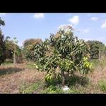 Chính chủ cần bán gấp đất đẹp: Ấp 11, Xã Xuân Tây, Huyện Cẩm Mỹ, Đồng Nai.