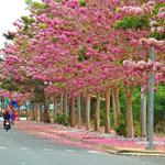 CĐT Hưng Thịnh_ Biên Hòa Universe_Căn Hộ Cao Cấp.