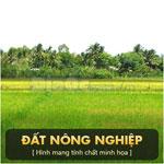 Nhượng quyền sử dụng đất nông nghiệp phường Tân Phú Trung, huyện Củ Chi, TP.HCM. DTSD: 2.448 m2