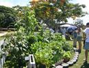 Sống Eco - Xu hướng phát triển của Thế Giới