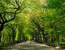 Sắp có công viên Central Park tại thành phố mới Bình Dương
