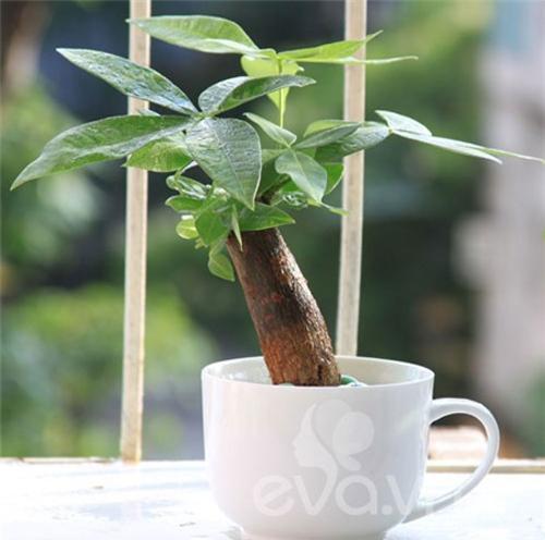 E0C datcaycanh 3 Cách đặt cây cảnh trên bàn làm việc, tài lộc và may mắn chảy vô ào ào