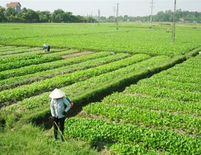 Đất nông nghiệp hết thời hạn sử dụng, xử lý thế nào?