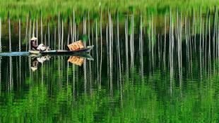 Rừng thông in bóng, một trong những nét đẹp đặc trưng của hồ Tuyền Lâm - Đà lạt