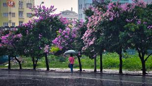Những con phố rợp bóng bằng lăng tại Hà Nội