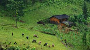 Huyện Yên Minh - Hà Giang với điệp trùng rừng thông xen lẫn những mái nhà người H'Mông