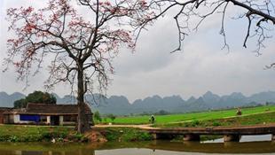 Làng quê Việt trong tháng Ba mùa hoa gạo