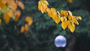 Hà Nội mùa lá vàng